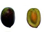 variedad-afafarenca-aceituna-aceite
