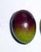 variedad-aceituna-Coratina