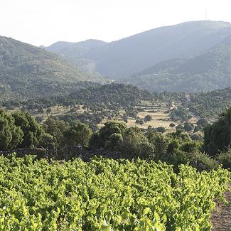 vinos-mediterraneos-atlanticos
