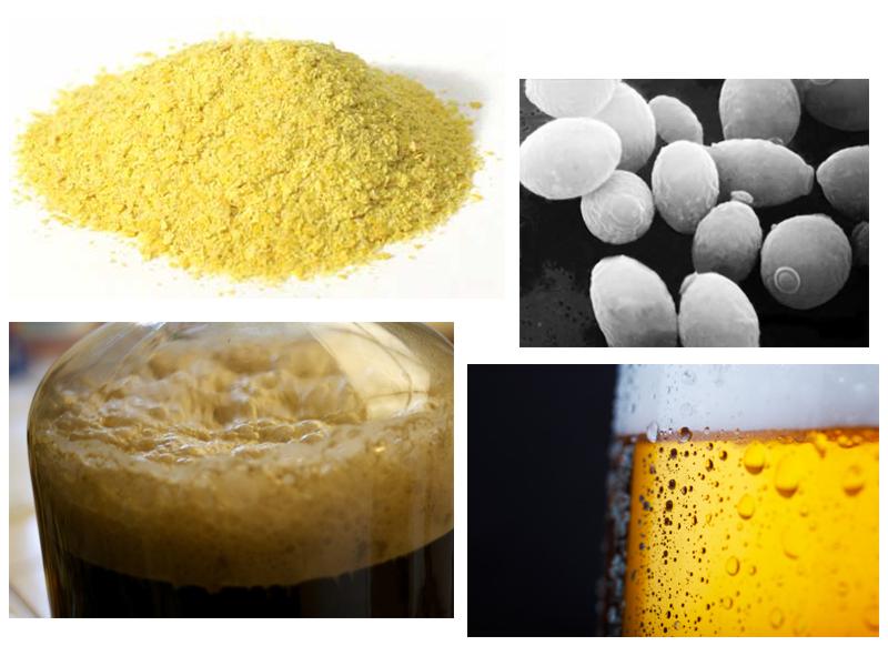 Levaduras de cerveza y fermentación