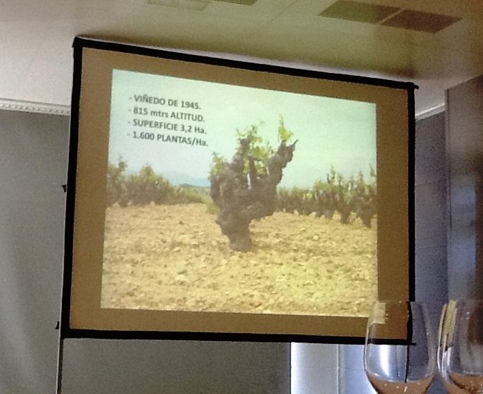 Cata_Vertical_Quincha_Corral_12_Encuentro_Foreros_Viñedo