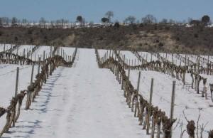 Viñedos de Montebaco nevados en invierno