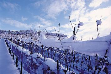 clasificación vinos alemanes, Eiswein
