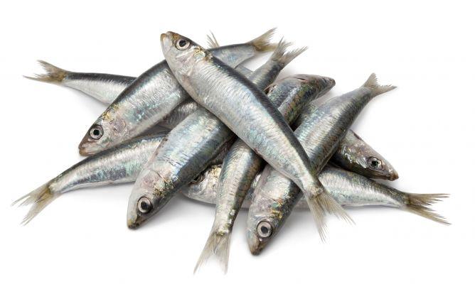 Sardinas pescados con sabor fuerte maridaje vinos