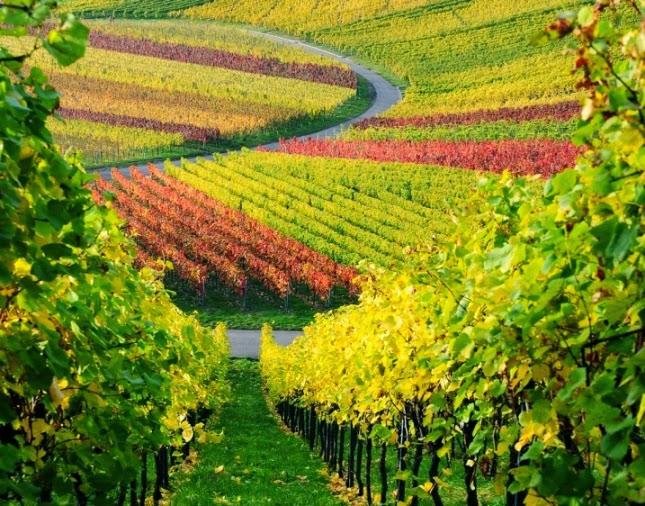 3. España: mejor región de vino del mundo