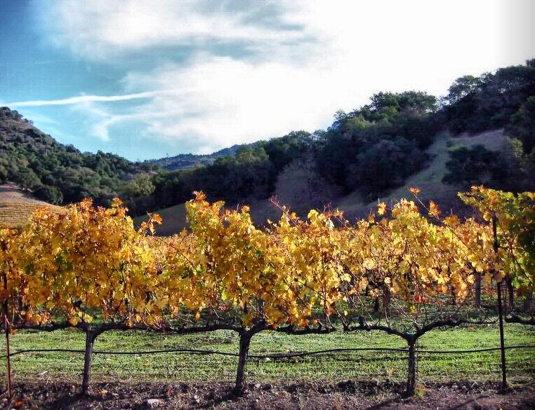 4. EE.UU: mejor región de vino del mundo