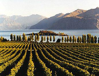 6. Australia: mejor región de vino del mundo