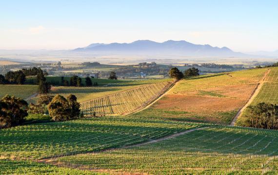 8. Sudáfrica: mejor región de vino del mundo