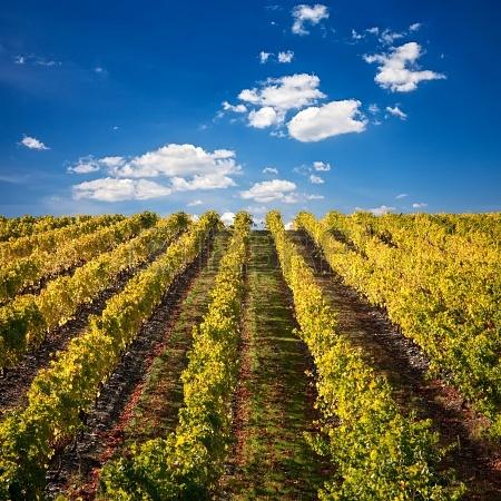 10. Portugal: mejor región de vino del mundo