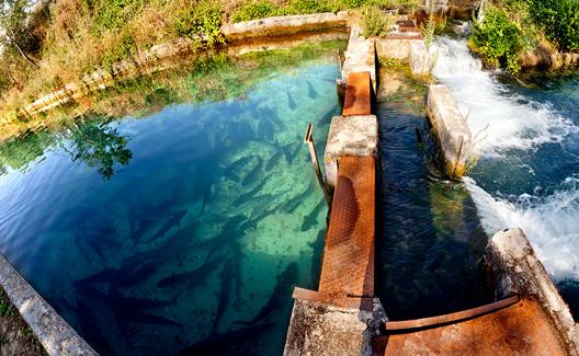 Paso entre piscinas de piscifactoria Riofrio