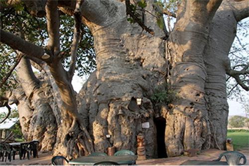 Baobab Bar