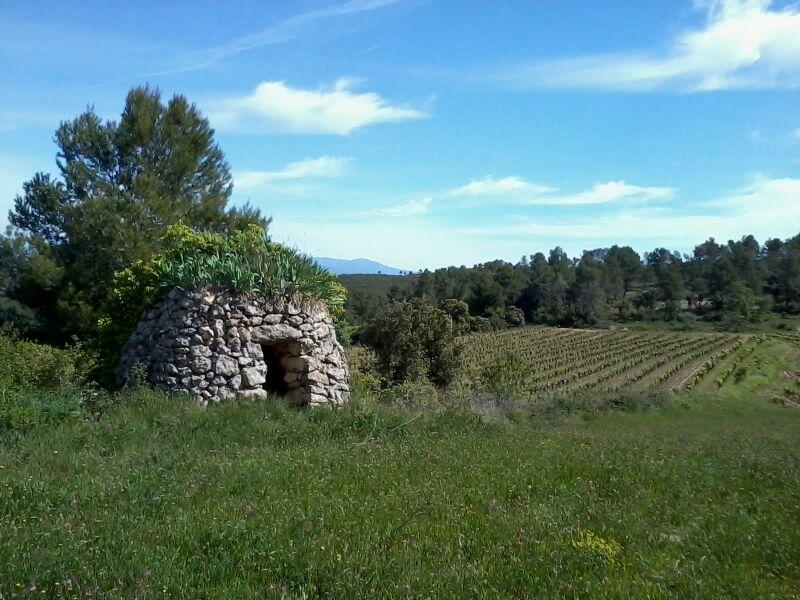 Cabaña de piedra en los viñedos.
