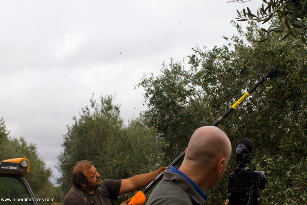 Filmando entre olivos