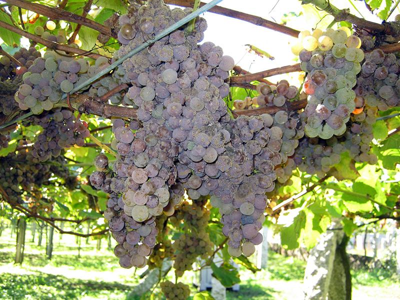 artín Códax: vinos de viñedo