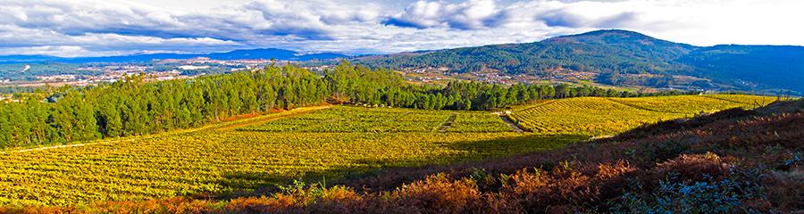 Martín Códax: vinos de viñedo