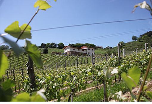 Viñedo en Cantabria