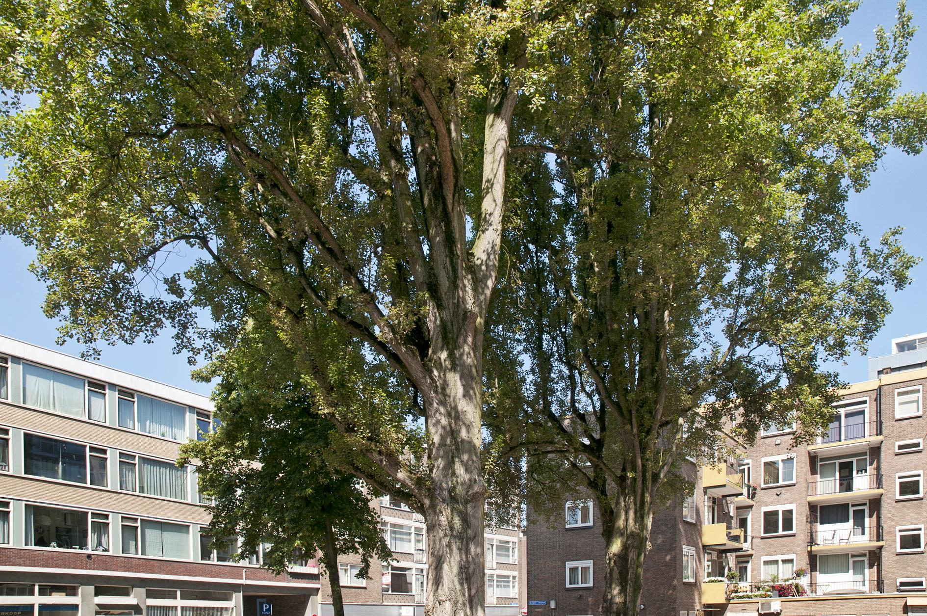 1e Sint-Janshof