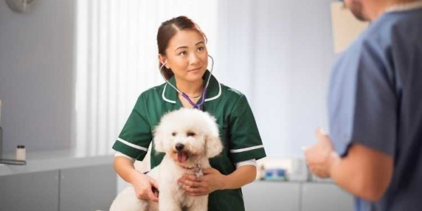 How to Become a Vet: From Training to Veterinary Recruitment