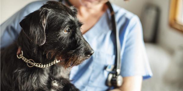 What is a Locum Veterinary Nurse?