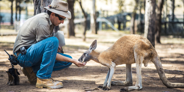 Careers for Animal Lovers: From Zookeeper to Vet Nurse Jobs