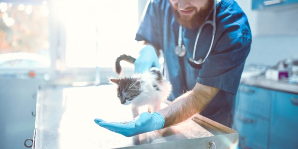 How to Make a Good Impression at Your Locum Vet Job