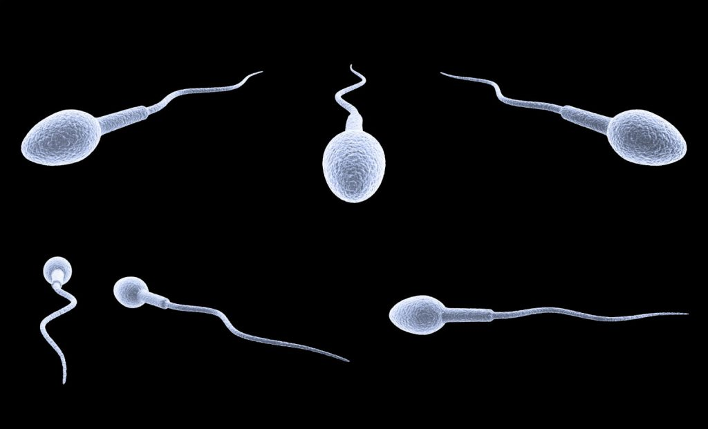 Absence of species specificity sperm capacitation