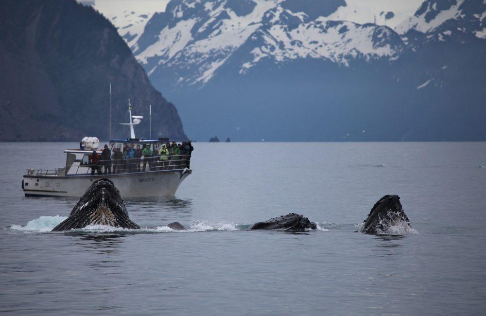 Humpback whale - Antarctica - Global Incentives