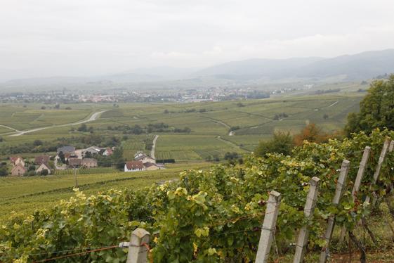 Långt där nedanför Gran Cru läget Altenberg de Bergheim slingrar sig Vinvägen.