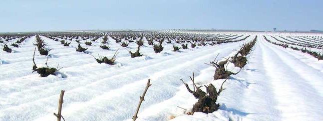vinrankor-rueda-vinter