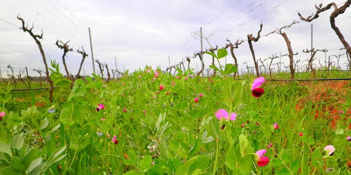 ekologiskt-vin