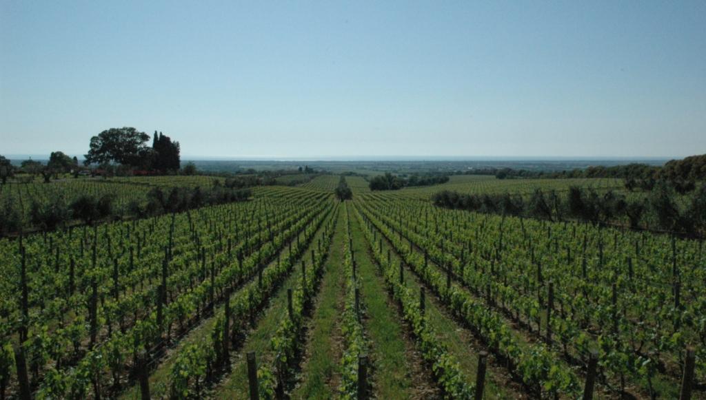 Bolgheris berömda viner