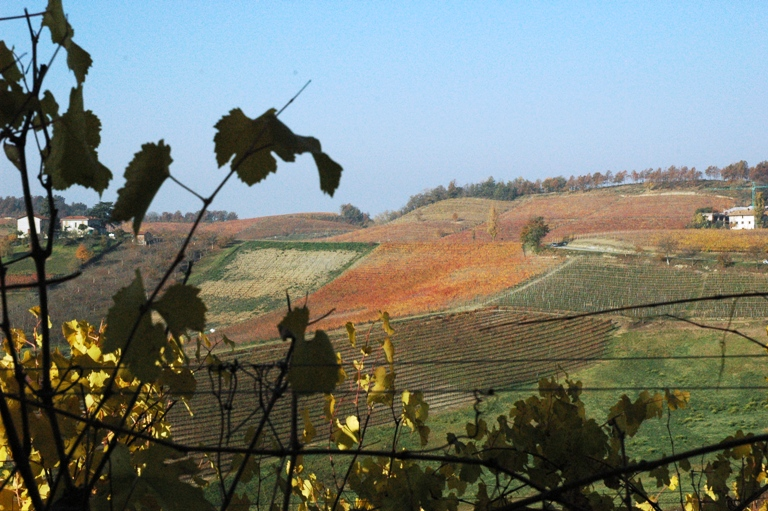 Pecchenino från Dogliani i Piemonte-vinbanken