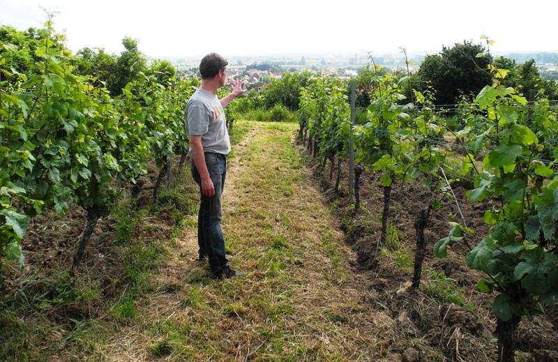 weingut-stefan-sander-rheinhessen-copy-vinbanken