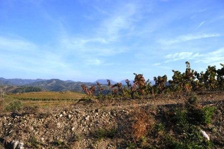 priorat-vinergia-vinbanken-visit-nov2016