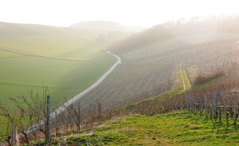 vinregion-nahe-tyskland-vinbanken