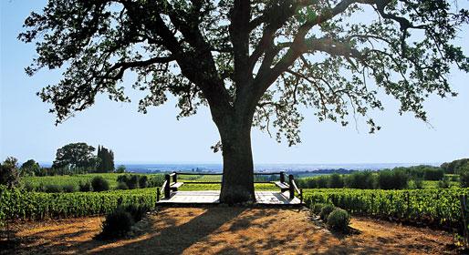 rnellaia-bolgheri-vinkoplistan-vinbanken