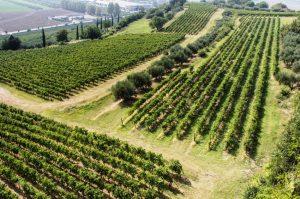 Pasqua - en vingård i Valpolicella, Italien