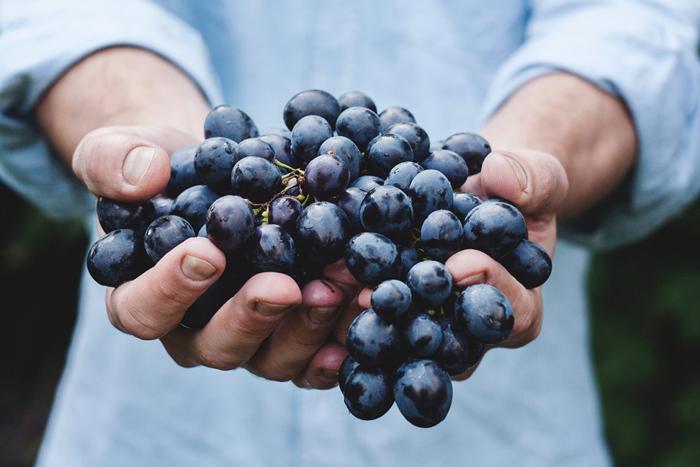 Mogna druvor innehåller socker som omvändlas till alkohol under jäsningen
