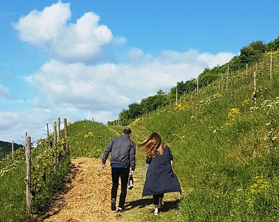 sommarvin-2018-topp-10-vinbanken