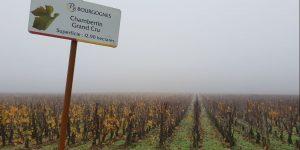 argang-2017-i-gevrey-chambertin-vinbanken