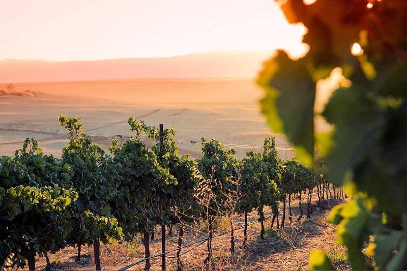 org-de-rac-vinkoplistan-vecka-11-vinbanken