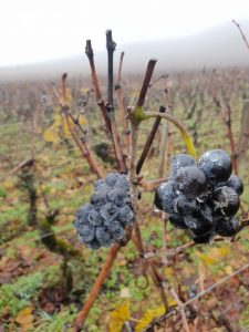 vader-och-vind-argang-2017-i-gevrey-chambertin-vinbanken