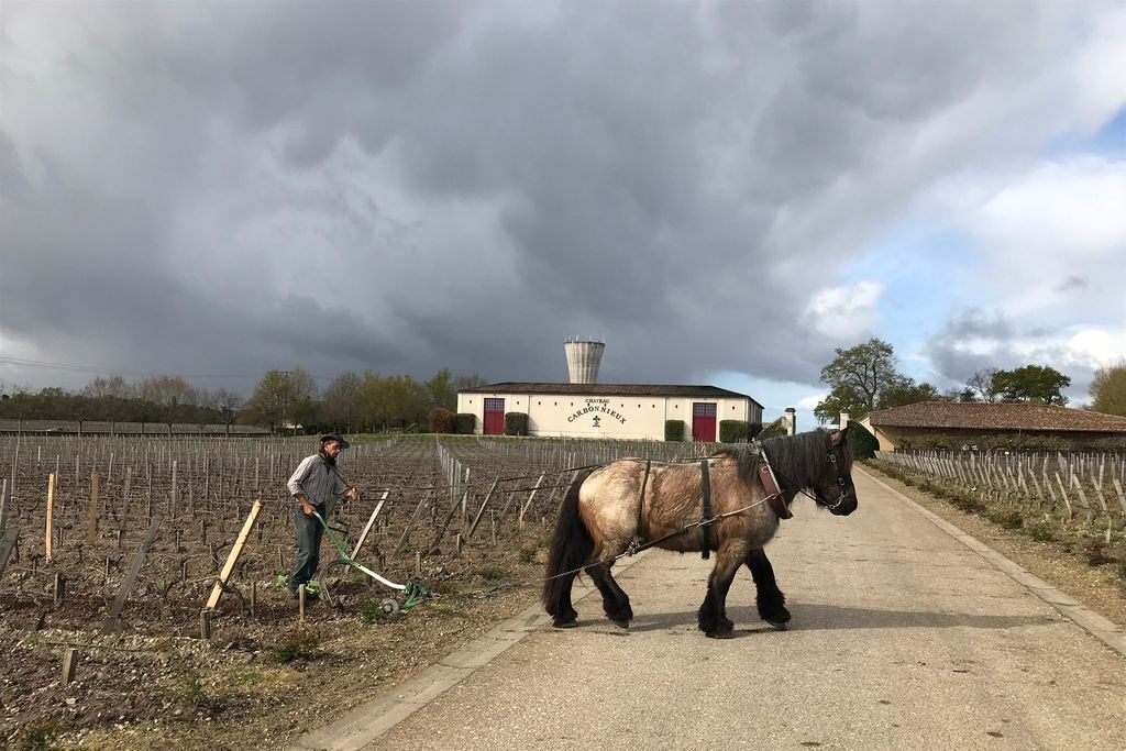 primörprovning-Château Carbonnieux-bordeaux-analys-årgångens-väder-vinbanken