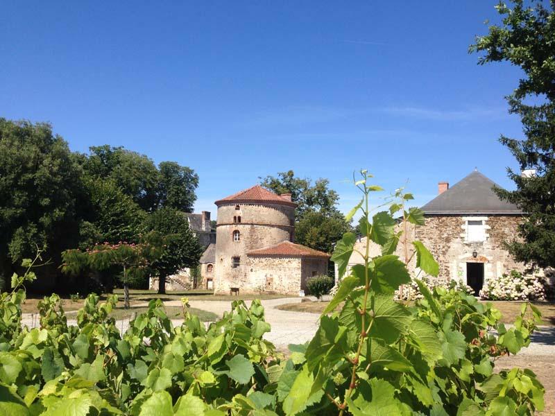 forandringens-tid-i-aop-muscadet-vinbanken