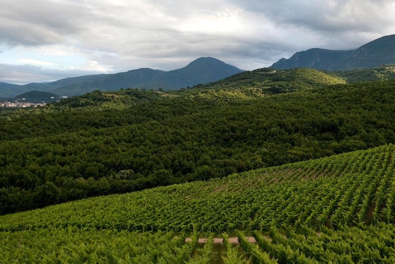 vinlandet-grekland-vinbanken