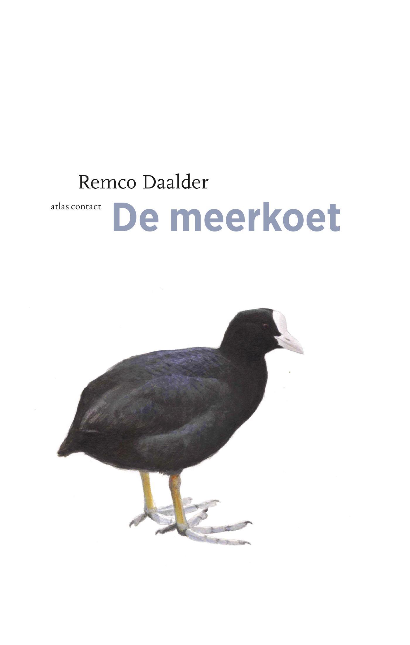 Cover Meerkoet