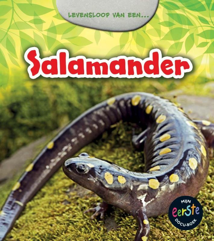 Cover Salamander