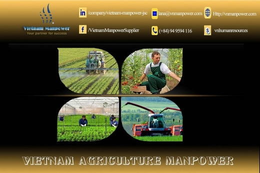 Wanted Job in Kfeir - Agriculture Manpower from Vietnam