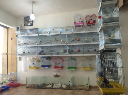Equipment & Accessories in Foaad Chehab - cockatoo pet store