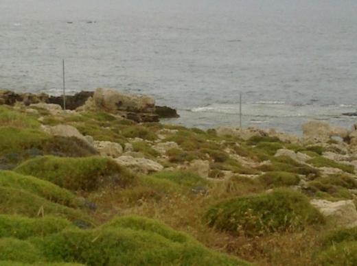 Land in Metn - أجمل ارض على شاطيء المنصف - عمشيت مساحة 3000م2 مع رخصة بناء واجهة على المياه 115م...
